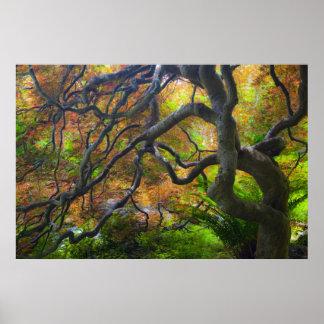 Autumn colour Maple trees, Victoria, British 3 Poster