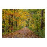 Autumn Colours At Independence State Park Poster