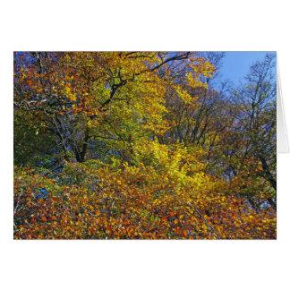 Autumn colours CARD