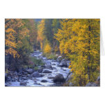 Autumn colours of forests in The Cascade 6 Greeting Cards