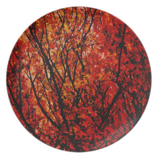 Autumn  Colours. Plate
