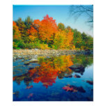 Autumn Colours reflecting in a stream in Vermont Poster