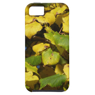 Autumn Comes iPhone 5 Cover