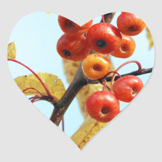 Autumn crab apples heart sticker
