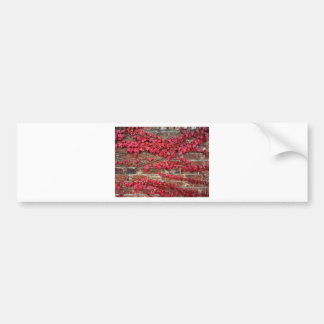 Autumn creepers bumper sticker