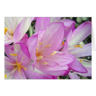 Autumn Crocus Card