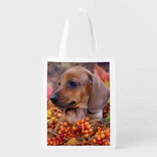 Autumn Dachshund Puppy