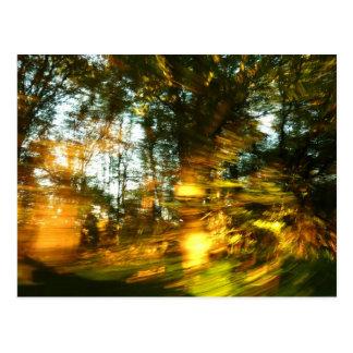Autumn dazzle! postcard