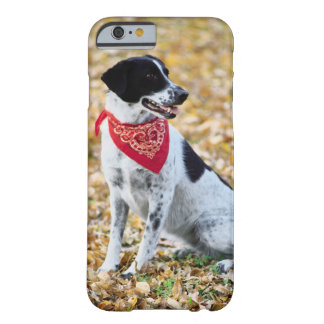 Autumn Dog Barely There iPhone 6 Case