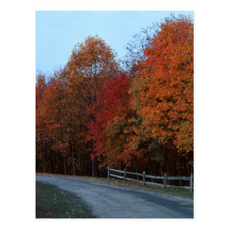Autumn Drive--2 Postcard