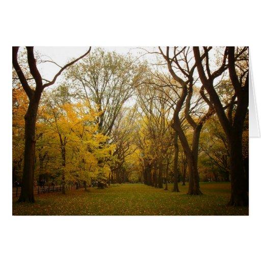 Autumn Elm Trees in Central Park, New York City Cards