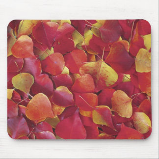Autumn Fall Collection Fallen Leaves Mousepad