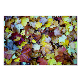 Autumn Fall Leaves Poster