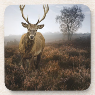 Autumn Fall with beautiful red deer stag Coaster