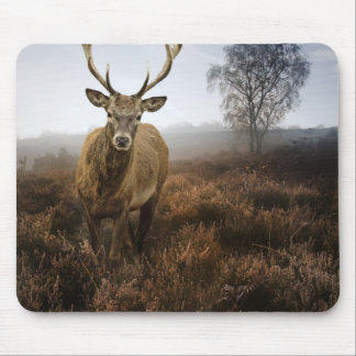Autumn Fall with beautiful red deer stag Mouse Pad