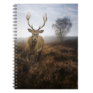 Autumn Fall with beautiful red deer stag Notebooks