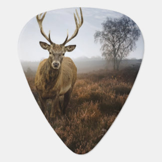 Autumn Fall with beautiful red deer stag Plectrum