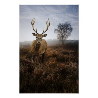 Autumn Fall with beautiful red deer stag Poster