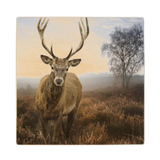 Autumn Fall with beautiful red deer stag Wood Coaster