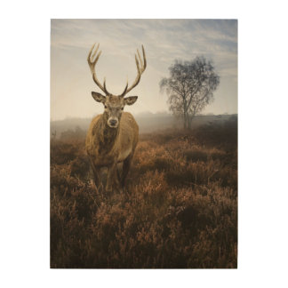 Autumn Fall with beautiful red deer stag Wood Prints