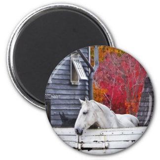 Autumn Farm With White Horse Magnet