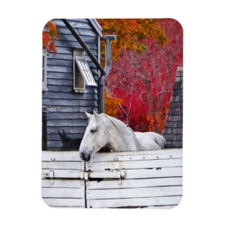 Autumn Farm With White Horse Magnets