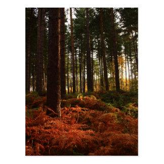 Autumn Ferns Postcards