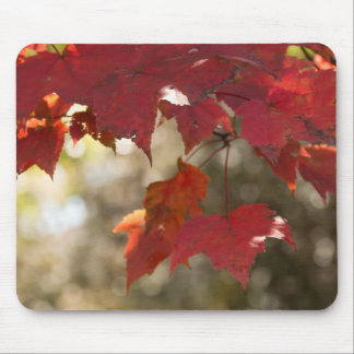 Autumn Foliage Mouse Mat