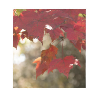 Autumn Foliage Notepad