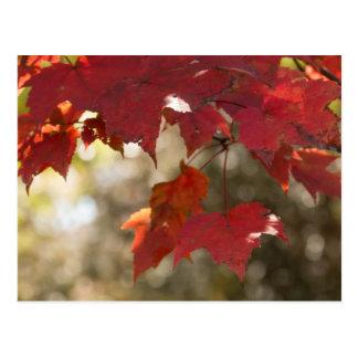 Autumn Foliage Postcard