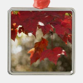 Autumn Foliage Silver-Colored Square Decoration