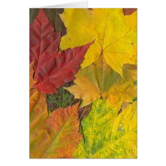 Autumn Foliage Splendor Forest Lake Destiny Greeting Card