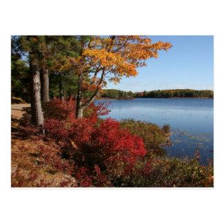 Autumn Foliage Splendor Forest Lake Destiny Post Cards