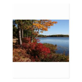 Autumn Foliage Splendor Forest Lake Destiny Postcard