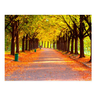 Autumn forest postcard