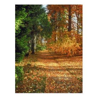 Autumn Forest Walk Postcards