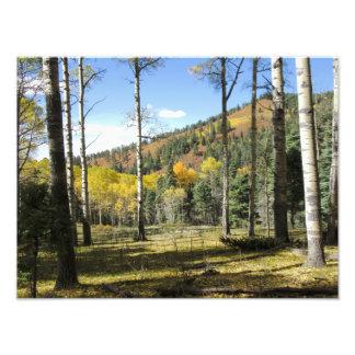 Autumn Glade Photo Print