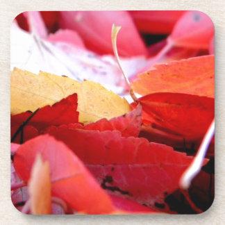 Autumn Glow Beverage Coaster