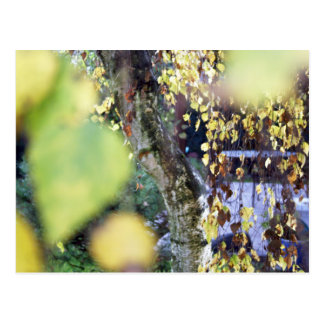 Autumn Golden Branches + Leaves Post Card