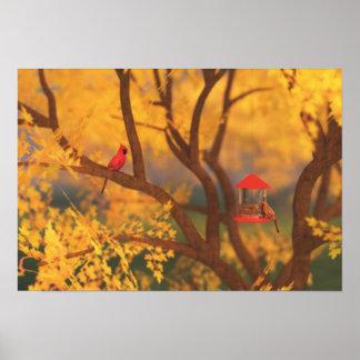 Autumn Guardian Print