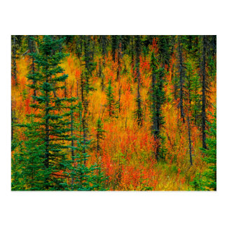 Autumn in a meadow post cards