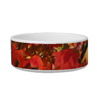 Autumn in Canberra Pet Water Bowl