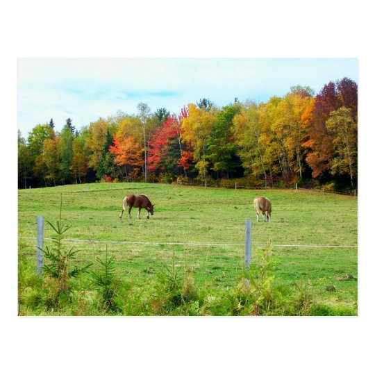Autumn_In_Maine_13 Postcard