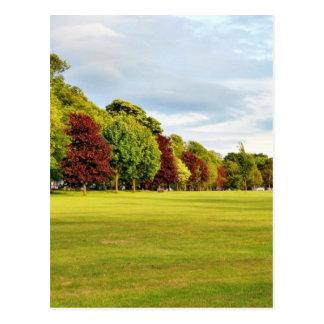 Autumn In Park Postcard