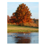 Autumn in the Park photo postcard