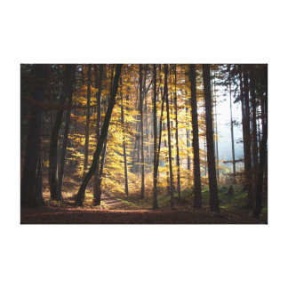Autumn in the Woods. Canvas Print