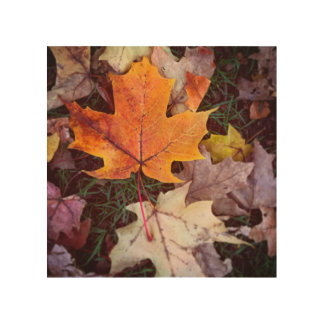 Autumn in Vancouver Wood Canvases