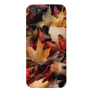 Autumn iPhone 5/5S Case
