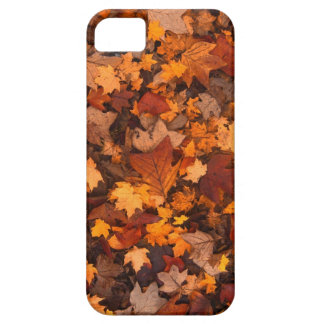 Autumn Iphone 5 marries Case For The iPhone 5