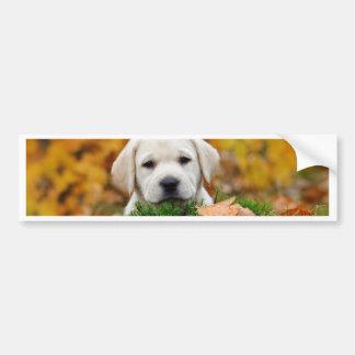 Autumn Labrador Bumper Sticker